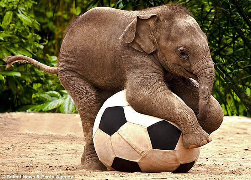 elephant [elɪfənt] – слон
