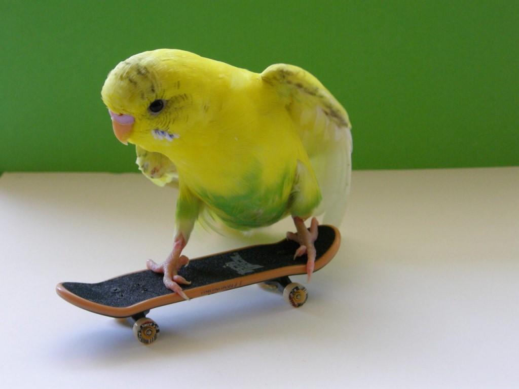 a parrot [parət] — попугай