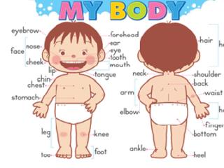 части тела на английском для детей - картинка для игры с малышами
