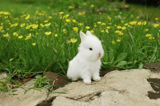 rabbit [ˈræbɪt] – кролик